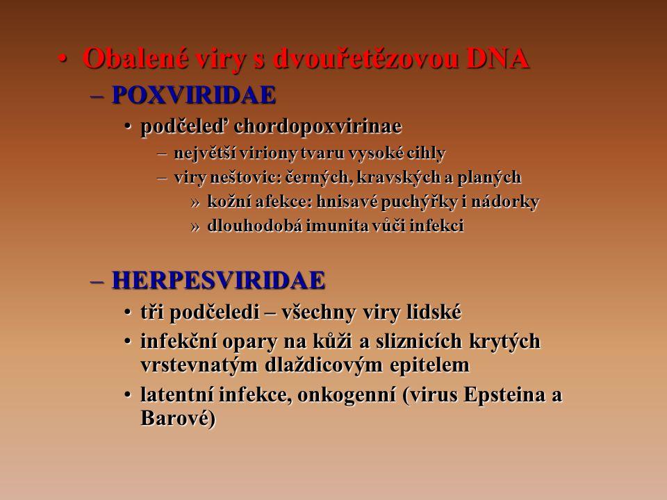 •Obalené viry s dvouřetězovou DNA –POXVIRIDAE •podčeleď chordopoxvirinae –největší viriony tvaru vysoké cihly –viry neštovic: černých, kravských a planých »kožní afekce: hnisavé puchýřky i nádorky »dlouhodobá imunita vůči infekci –HERPESVIRIDAE •tři podčeledi – všechny viry lidské •infekční opary na kůži a sliznicích krytých vrstevnatým dlaždicovým epitelem •latentní infekce, onkogenní (virus Epsteina a Barové)