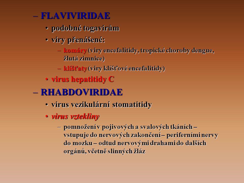 –FLAVIVIRIDAE •podobné togavirům •viry přenášené: –komáry (viry encefalitidy, tropické choroby dengue, žlutá zimnice) –klíšťaty (viry klíšťové encefalitidy) •virus hepatitidy C –RHABDOVIRIDAE •virus vezikulární stomatitidy •virus vztekliny –pomnožení v pojivových a svalových tkáních – vstupuje do nervových zakončení – periferními nervy do mozku – odtud nervovými drahami do dalších orgánů, včetně slinných žláz