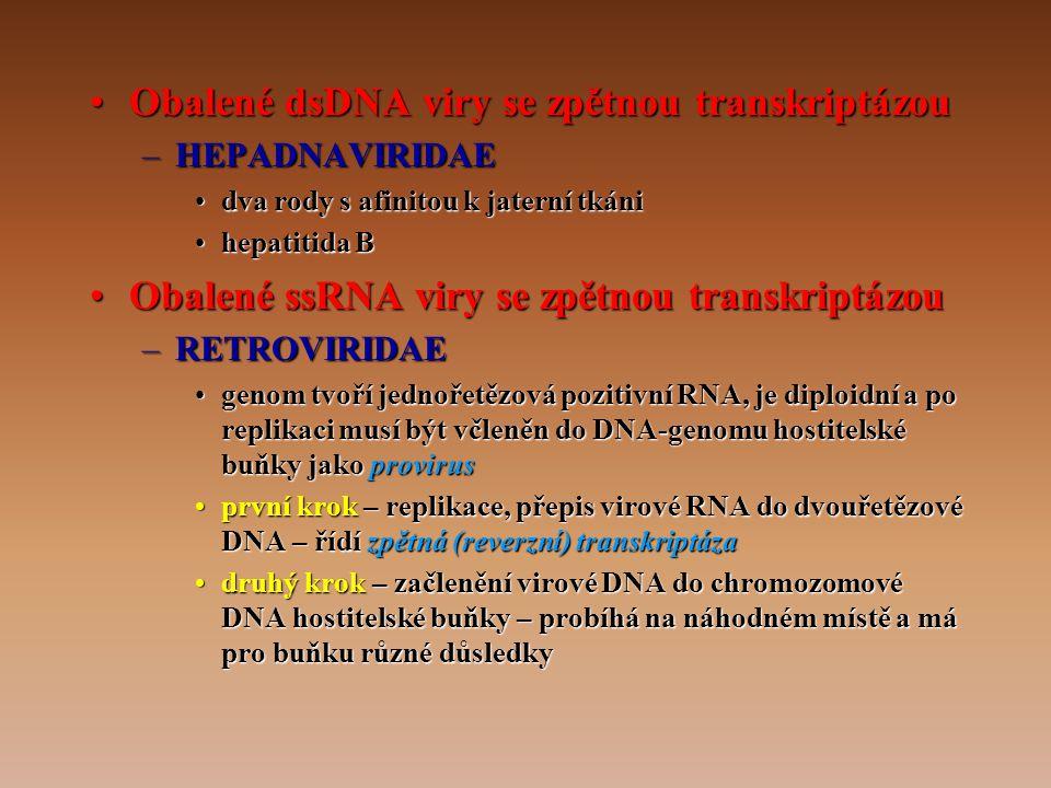 •Obalené dsDNA viry se zpětnou transkriptázou –HEPADNAVIRIDAE •dva rody s afinitou k jaterní tkáni •hepatitida B •Obalené ssRNA viry se zpětnou transkriptázou –RETROVIRIDAE •genom tvoří jednořetězová pozitivní RNA, je diploidní a po replikaci musí být včleněn do DNA-genomu hostitelské buňky jako provirus •první krok – replikace, přepis virové RNA do dvouřetězové DNA – řídí zpětná (reverzní) transkriptáza •druhý krok – začlenění virové DNA do chromozomové DNA hostitelské buňky – probíhá na náhodném místě a má pro buňku různé důsledky