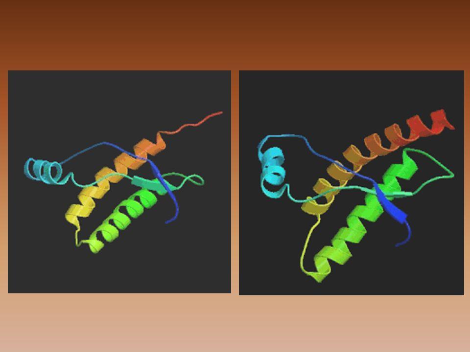 Onemocnění způsobené priony •S velmi podobnými příznaky - se stejnou molekulární patogenezí – vznikají třemi různými cestami: –infekční – získané přenosem proteinu PrPsc z infikovaného jedince téhož druhu (u zvířat mezidruhový – u člověka ne!) –dědičné, familiární – známy jen u lidí, tvoří 10-15% případů, mutace genu Prnp –sporadické – bez souvislosti infekční či genetické, jsou vzácné