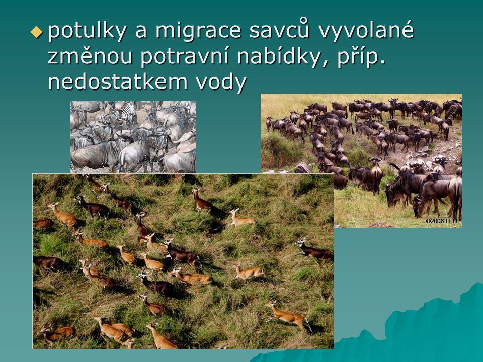  potulky a migrace savců vyvolané změnou potravní nabídky, příp. nedostatkem vody