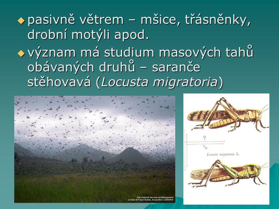  pasivně větrem – mšice, třásněnky, drobní motýli apod.  význam má studium masových tahů obávaných druhů – saranče stěhovavá (Locusta migratoria)