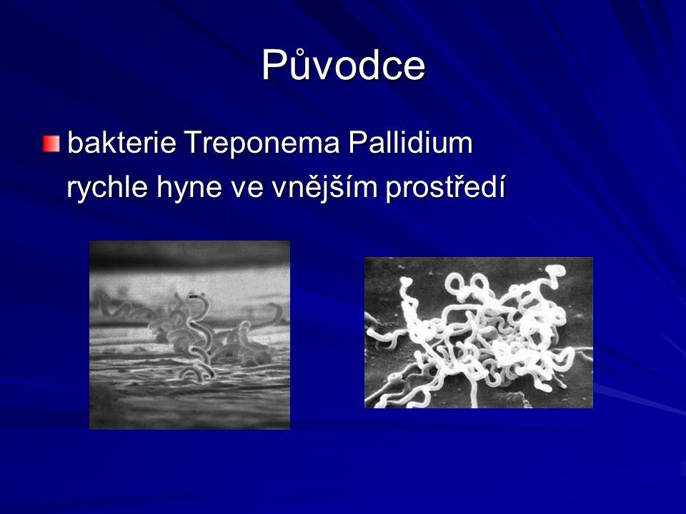 Původce bakterie Treponema Pallidium rychle hyne ve vnějším prostředí rychle hyne ve vnějším prostředí