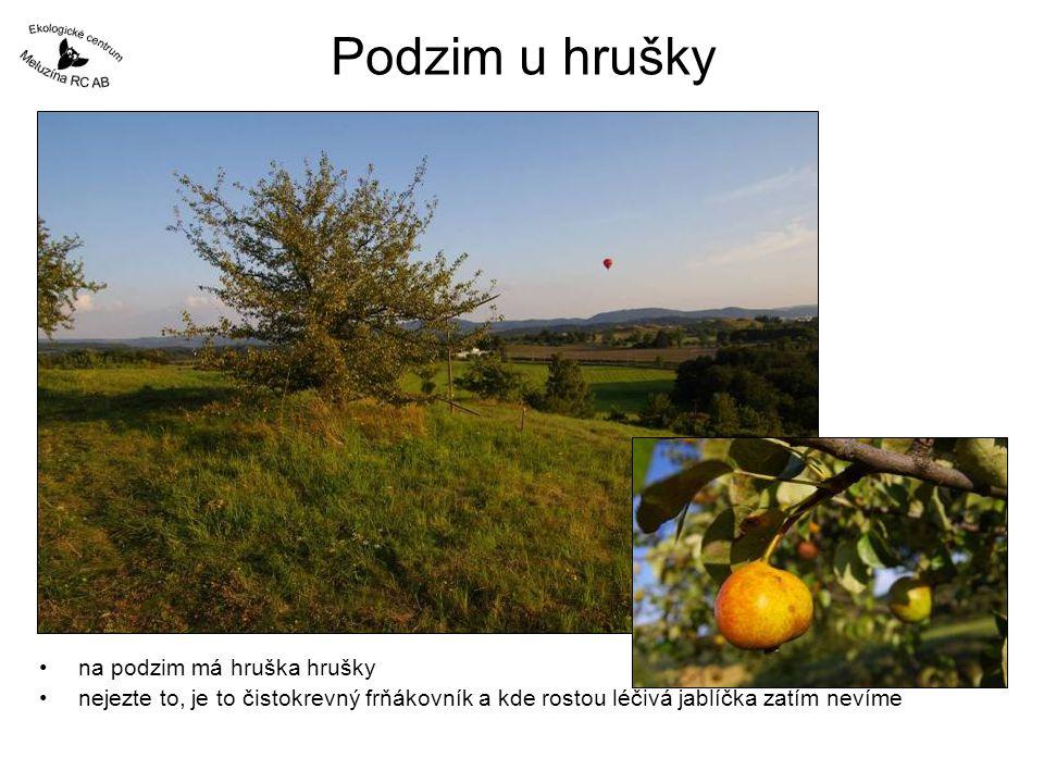 Podzim u hrušky •na podzim má hruška hrušky •nejezte to, je to čistokrevný frňákovník a kde rostou léčivá jablíčka zatím nevíme