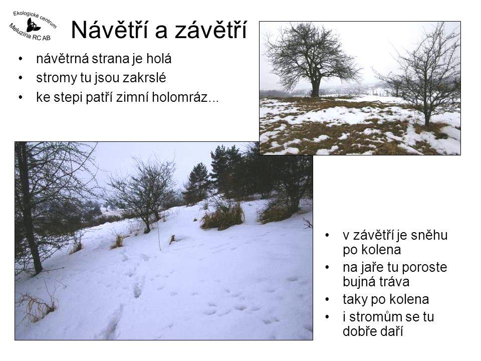 Návětří a závětří •návětrná strana je holá •stromy tu jsou zakrslé •ke stepi patří zimní holomráz... •v závětří je sněhu po kolena •na jaře tu poroste