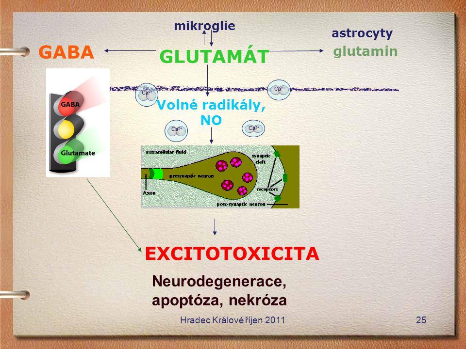 mikroglie GLUTAMÁT glutamin GABA Ca 2+ Volné radikály, NO EXCITOTOXICITA Neurodegenerace, apoptóza, nekróza astrocyty Ca 2+ Hradec Králové říjen 20112