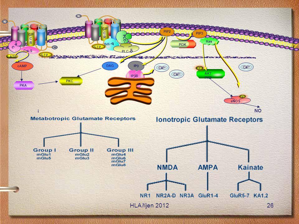 PI3K GP C R C C N N PIP2 PIP3 GP C R C C N N eNOS P AKT PKB P NO DAG ACAC G-qG-q IP3 IP3R cAMP PKA PKC GTP Ca 2+ Ras PLC-  PLC-  G  -S ATP i 26HL