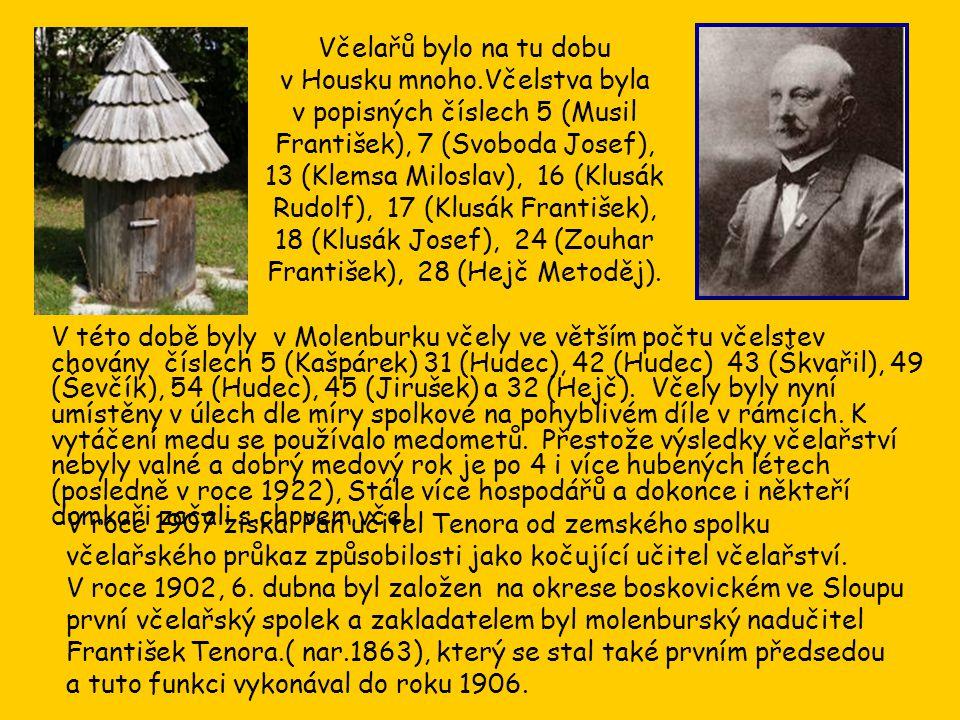 V roce 1907 získal Pan učitel Tenora od zemského spolku včelařského průkaz způsobilosti jako kočující učitel včelařství.