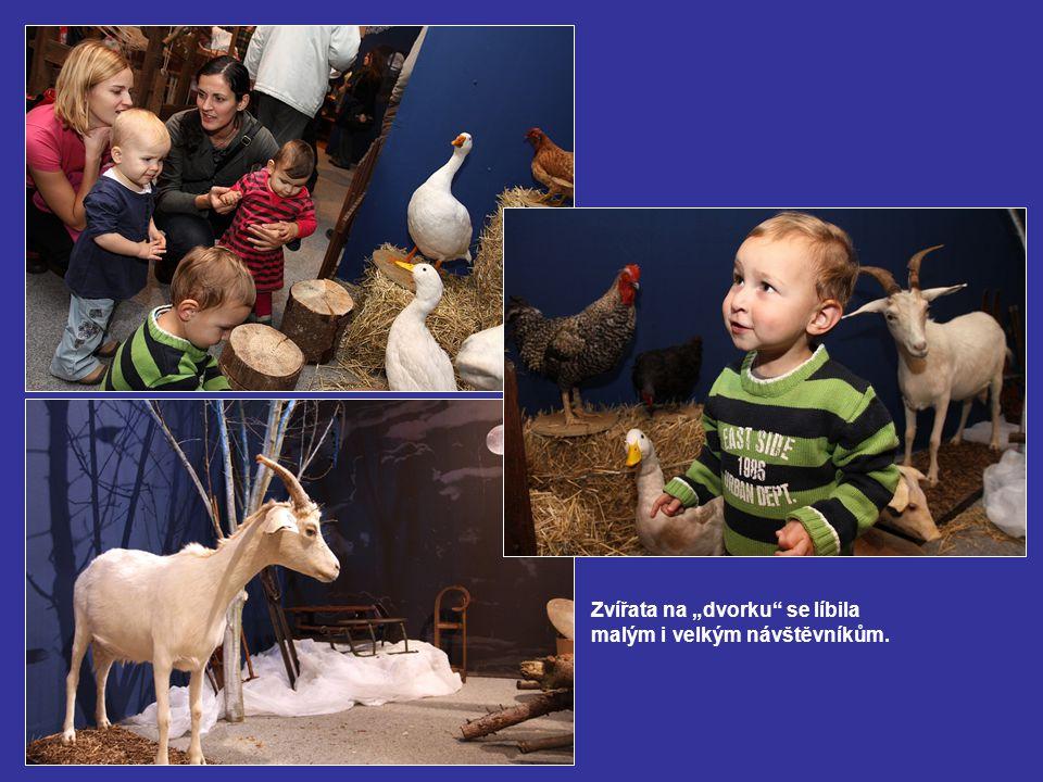"""Zvířata na """"dvorku se líbila malým i velkým návštěvníkům."""