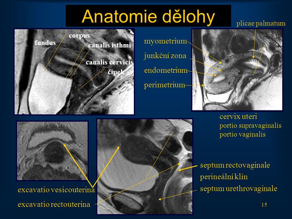 15 Anatomie dělohy septum rectovaginale perineální klín septum urethrovaginale myometrium junkční zona endometrium perimetrium fundus corpus canalis i