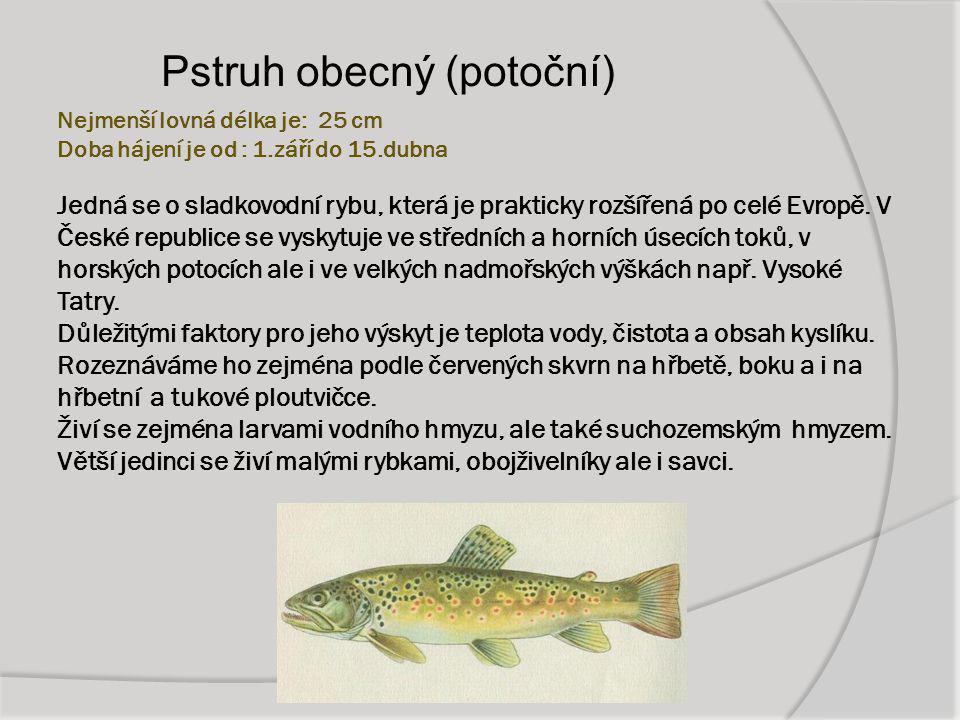Nejmenší lovná délka je: 25 cm Doba hájení je od : 1.září do 15.dubna Jedná se o sladkovodní rybu, která je prakticky rozšířená po celé Evropě. V Česk