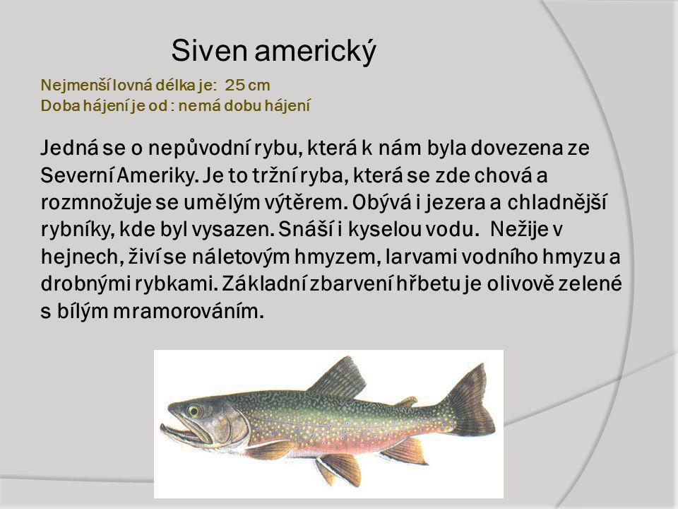 Nejmenší lovná délka je: 25 cm Doba hájení je od : nemá dobu hájení Jedná se o nepůvodní rybu, která k nám byla dovezena ze Severní Ameriky. Je to trž