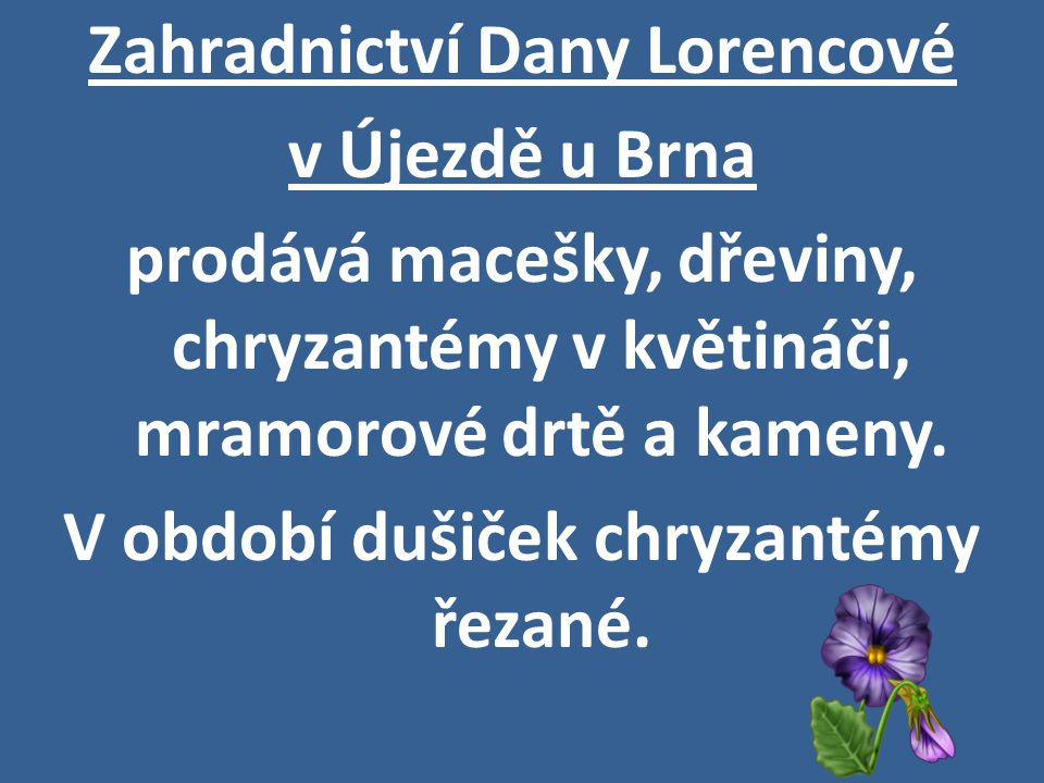 Zahradnictví Dany Lorencové v Újezdě u Brna prodává macešky, dřeviny, chryzantémy v květináči, mramorové drtě a kameny. V období dušiček chryzantémy ř