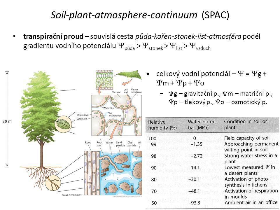 Soil-plant-atmosphere-continuum (SPAC) • transpirační proud – souvislá cesta půda-kořen-stonek-list-atmosféra podél gradientu vodního potenciálu  půd