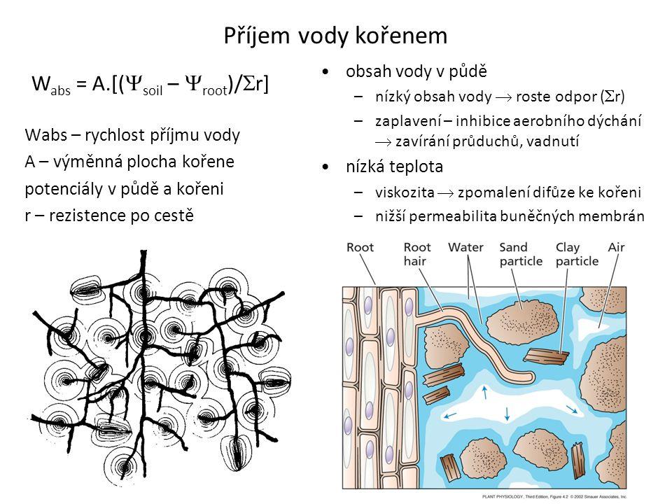 Příjem vody kořenem W abs = A.[(  soil –  root )/  r] Wabs – rychlost příjmu vody A – výměnná plocha kořene potenciály v půdě a kořeni r – rezisten
