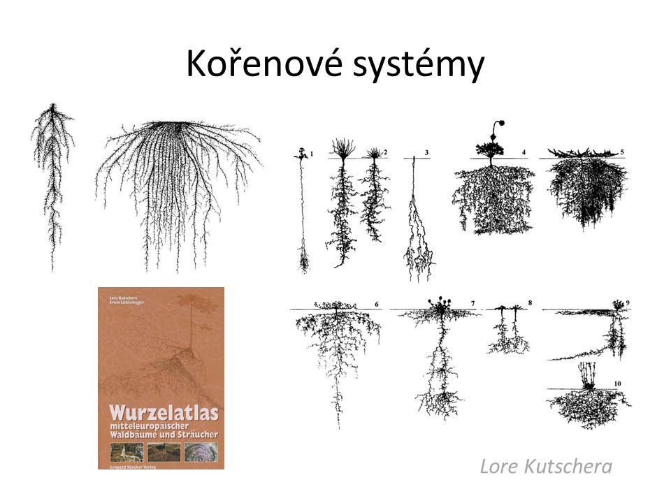 Kořenové systémy Lore Kutschera