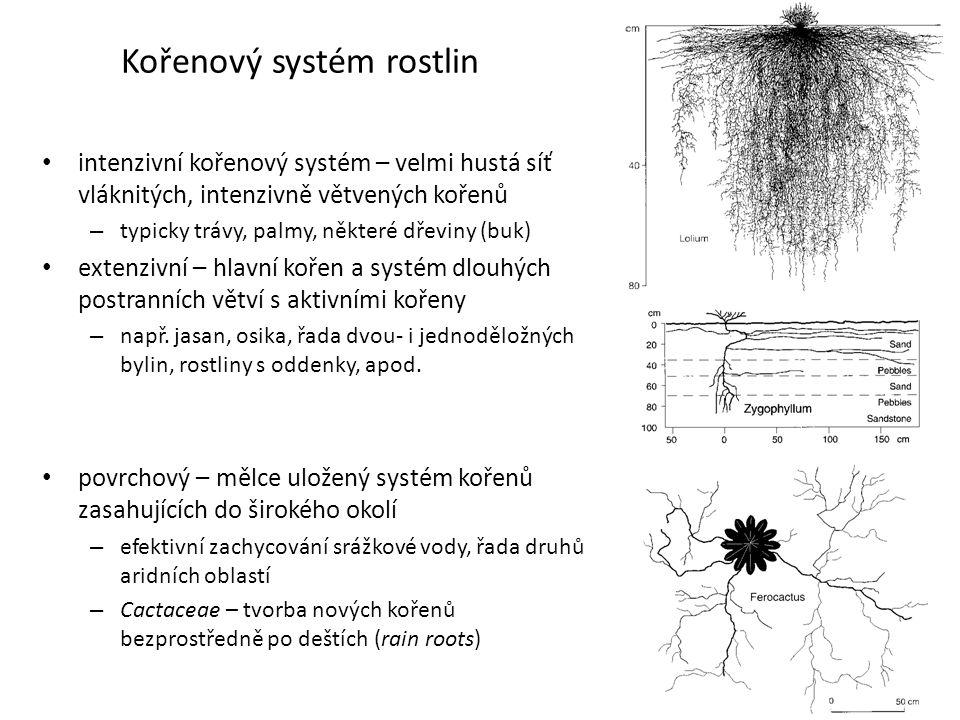 Kořenový systém rostlin • intenzivní kořenový systém – velmi hustá síť vláknitých, intenzivně větvených kořenů – typicky trávy, palmy, některé dřeviny