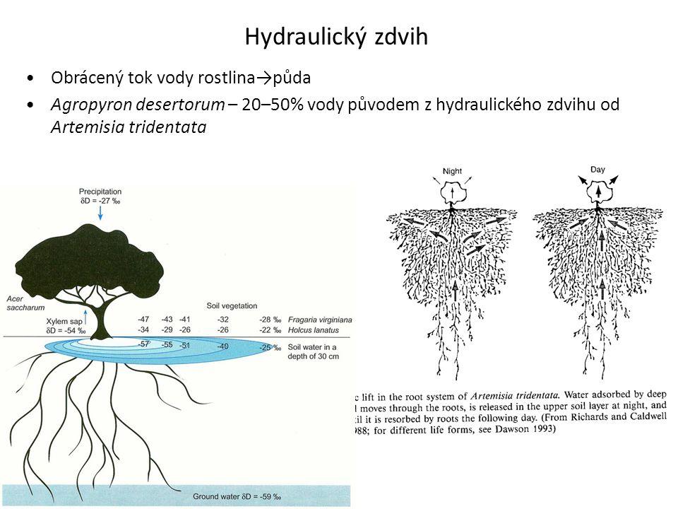 Hydraulický zdvih •Obrácený tok vody rostlina→půda •Agropyron desertorum – 20–50% vody původem z hydraulického zdvihu od Artemisia tridentata