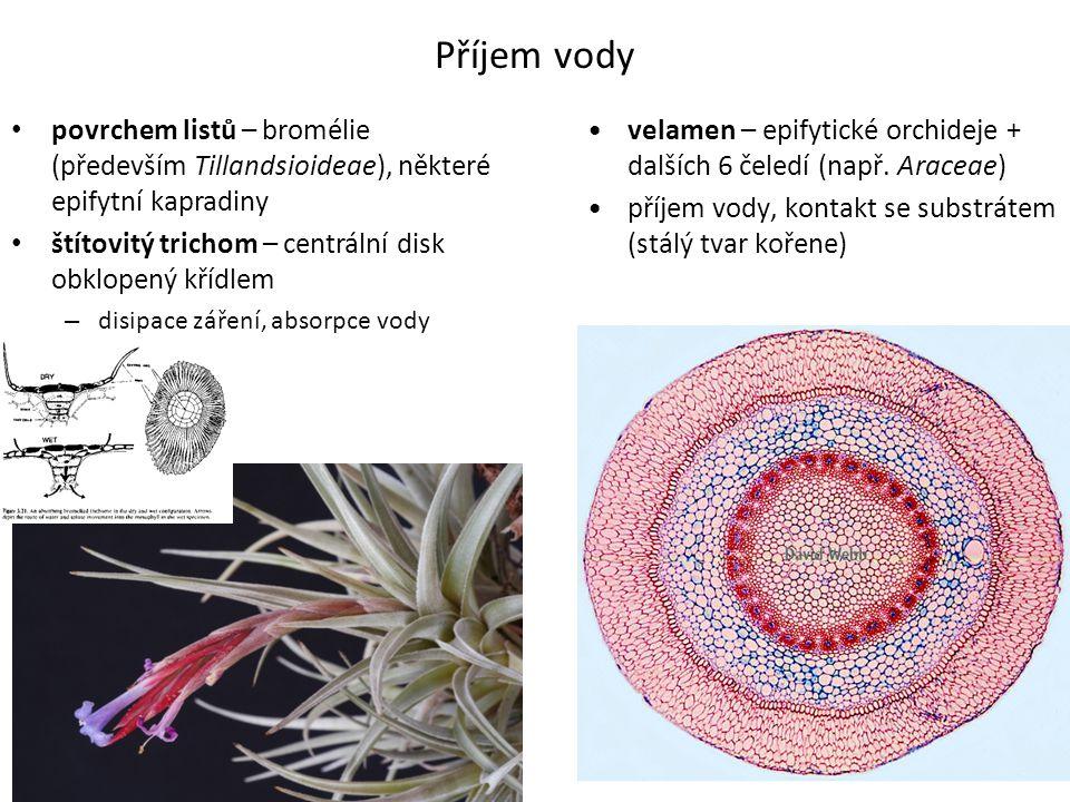 Příjem vody • povrchem listů – bromélie (především Tillandsioideae), některé epifytní kapradiny • štítovitý trichom – centrální disk obklopený křídlem