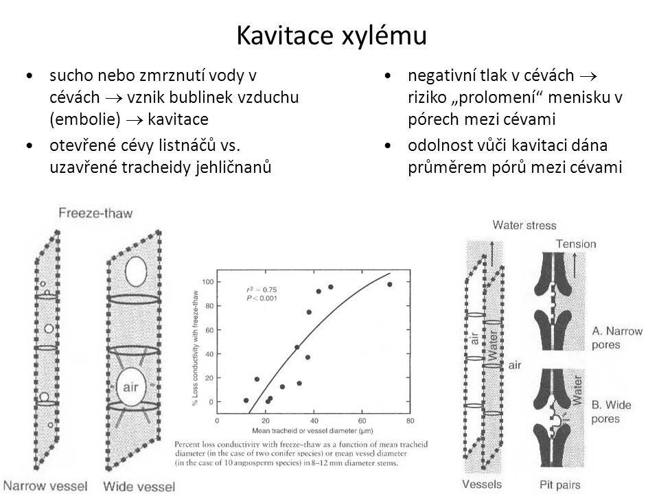 """Kavitace xylému •negativní tlak v cévách  riziko """"prolomení"""" menisku v pórech mezi cévami •odolnost vůči kavitaci dána průměrem pórů mezi cévami •suc"""
