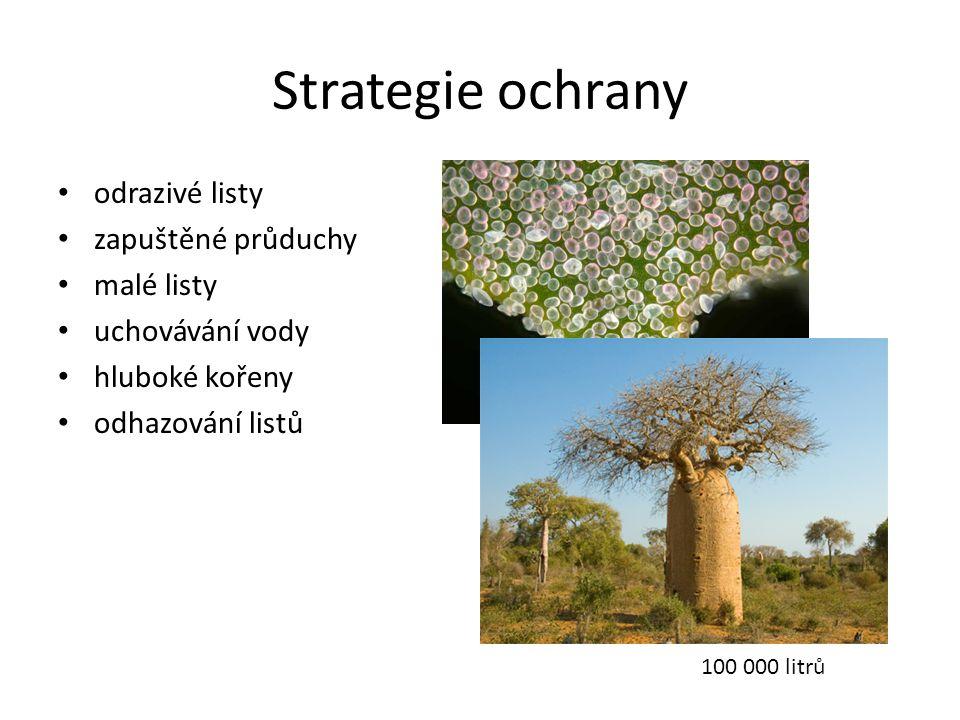 Strategie ochrany • odrazivé listy • zapuštěné průduchy • malé listy • uchovávání vody • hluboké kořeny • odhazování listů 100 000 litrů