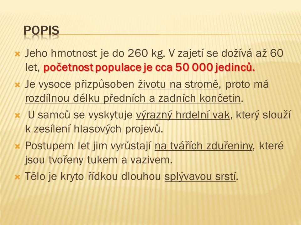 početnost populace je cca 50 000 jedinců. Jeho hmotnost je do 260 kg.