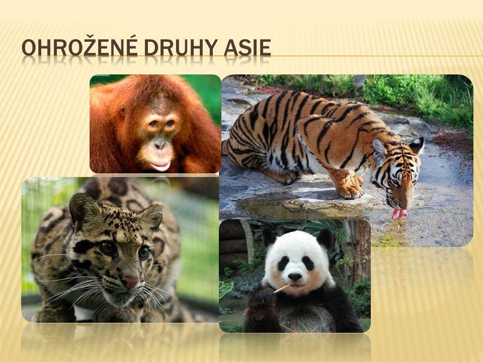  Spouštěčem je především rozvoj lovu zvířat pro obchod.