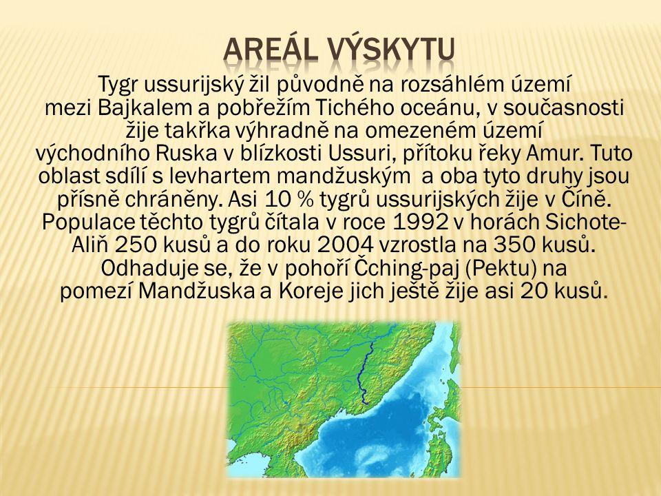 Tygr ussurijský žil původně na rozsáhlém území mezi Bajkalem a pobřežím Tichého oceánu, v současnosti žije takřka výhradně na omezeném území východního Ruska v blízkosti Ussuri, přítoku řeky Amur.