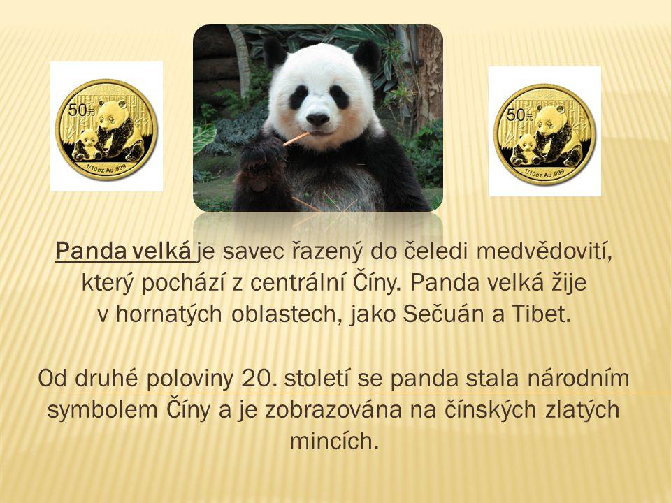 Panda velká je savec řazený do čeledi medvědovití, který pochází z centrální Číny.