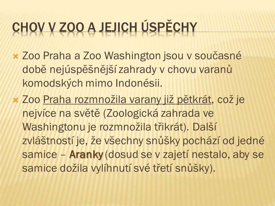  Zoo Praha a Zoo Washington jsou v současné době nejúspěšnější zahrady v chovu varanů komodských mimo Indonésii.