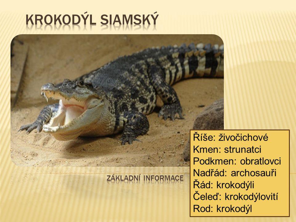  Krokodýl siamský je sladkovodní krokodýl původně obývající Indonésii (Borneo a možná Jávu), Brunej, východní Malajsii, Laos, Barmu, Thajsko a Vietnam.