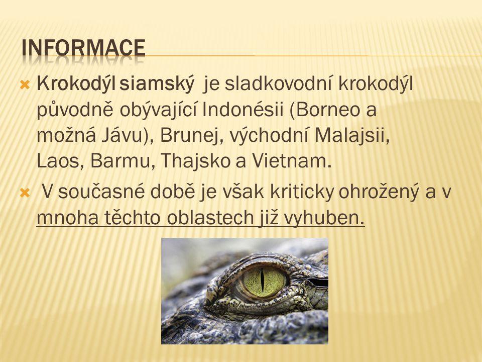  Na světě se pohybuje asi 5 000 jedinců krokodýla siamského.