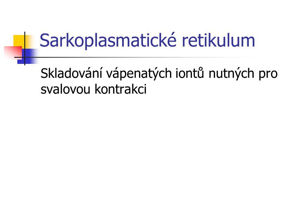 Sarkoplasmatické retikulum Skladování vápenatých iontů nutných pro svalovou kontrakci