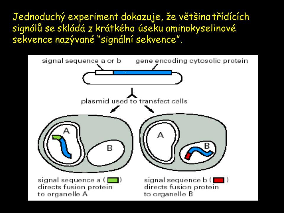 """Jednoduchý experiment dokazuje, že většina třídících signálů se skládá z krátkého úseku aminokyselinové sekvence nazývané """"signální sekvence""""."""