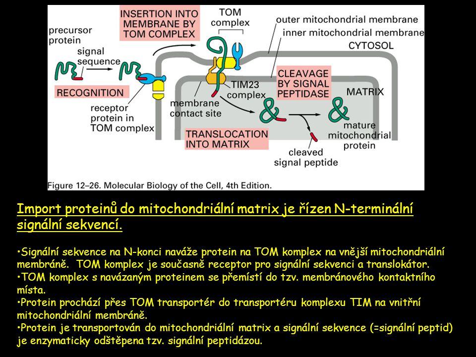 Import proteinů do mitochondriální matrix je řízen N-terminální signální sekvencí. •Signální sekvence na N-konci naváže protein na TOM komplex na vněj