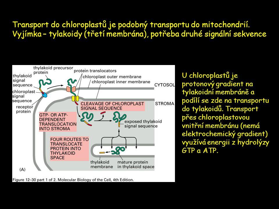 Transport do chloroplastů je podobný transportu do mitochondrií. Vyjímka – tylakoidy (třetí membrána), potřeba druhé signální sekvence U chloroplastů