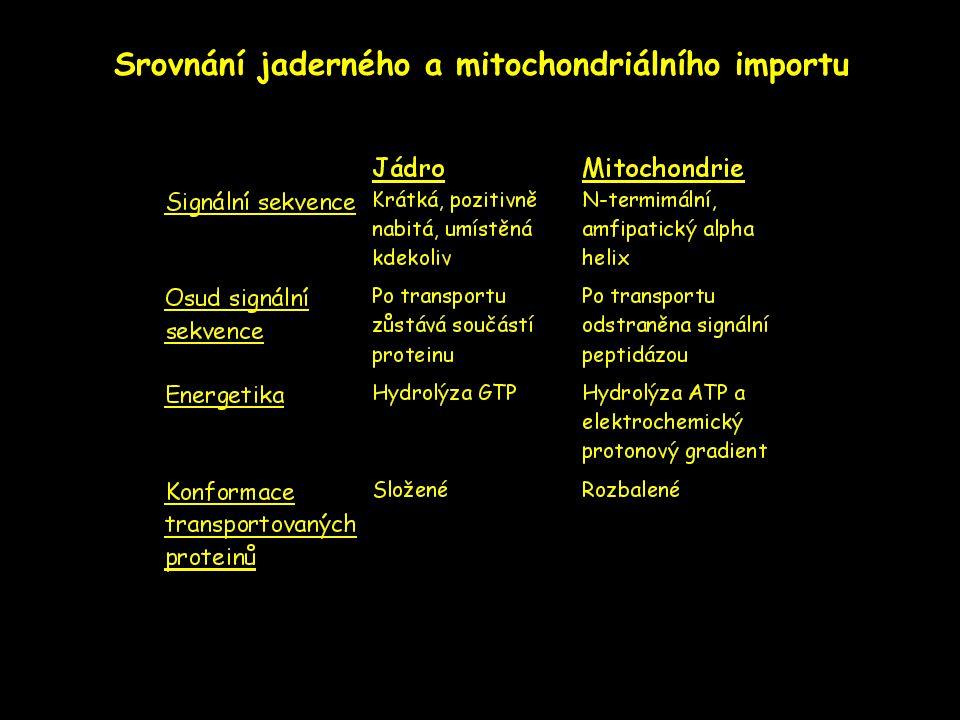 Srovnání jaderného a mitochondriálního importu