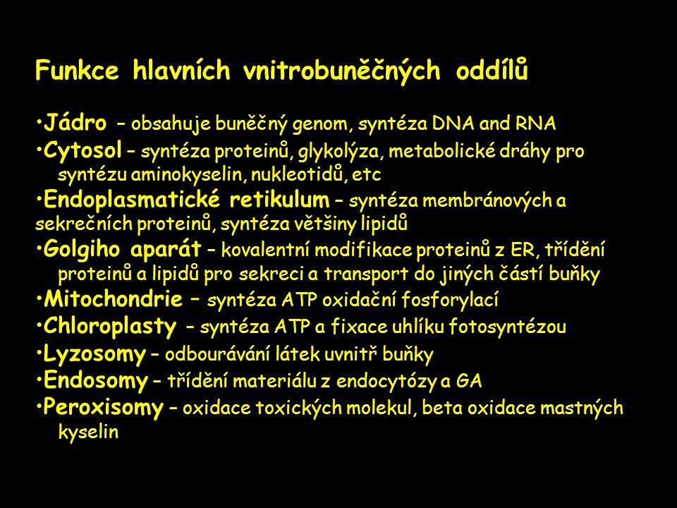Funkce hlavních vnitrobuněčných oddílů •Jádro – obsahuje buněčný genom, syntéza DNA and RNA •Cytosol – syntéza proteinů, glykolýza, metabolické dráhy