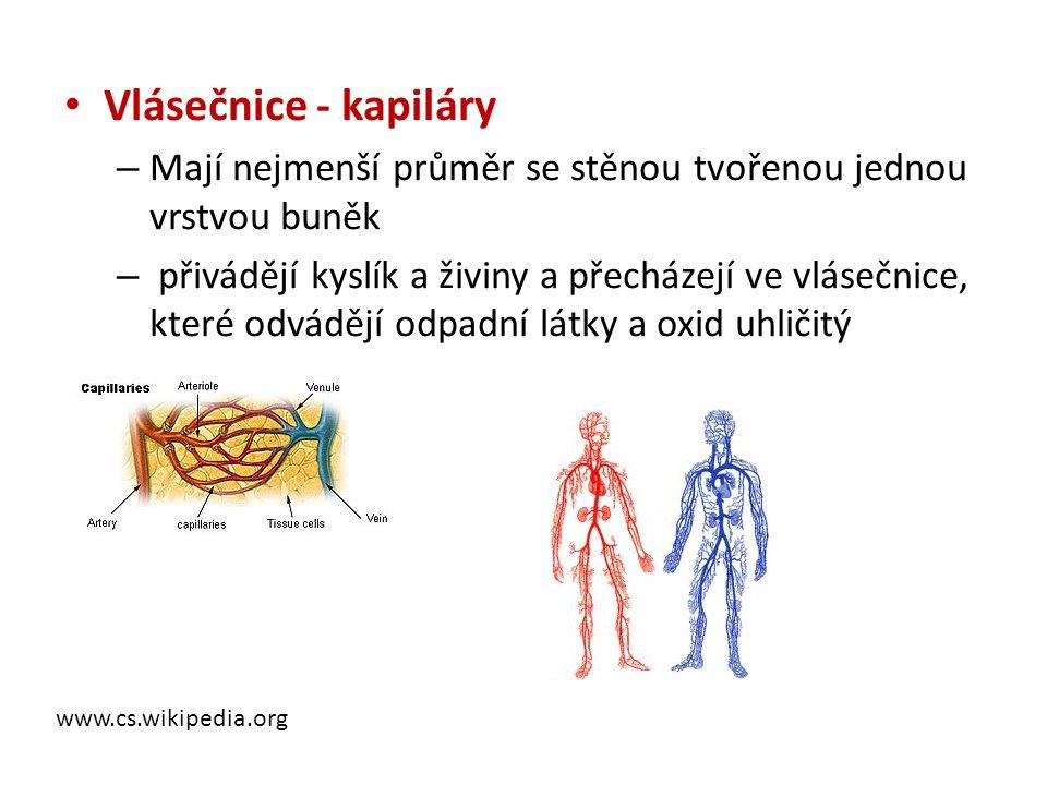 • Vlásečnice - kapiláry – Mají nejmenší průměr se stěnou tvořenou jednou vrstvou buněk – přivádějí kyslík a živiny a přecházejí ve vlásečnice, které o