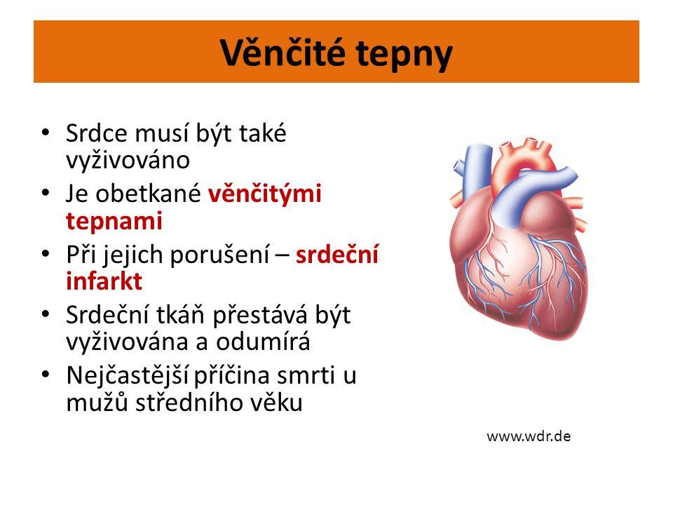 Věnčité tepny • Srdce musí být také vyživováno • Je obetkané věnčitými tepnami • Při jejich porušení – srdeční infarkt • Srdeční tkáň přestává být vyž