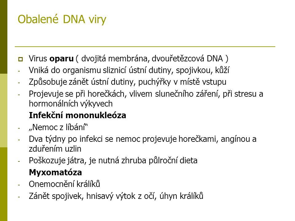 Obalené DNA viry  Virus oparu ( dvojitá membrána, dvouřetězcová DNA ) - Vniká do organismu sliznicí ústní dutiny, spojivkou, kůží - Způsobuje zánět ú