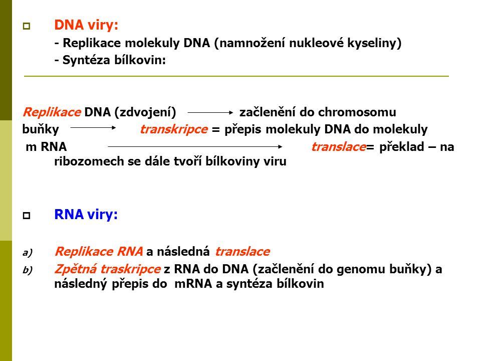  DNA viry: - Replikace molekuly DNA (namnožení nukleové kyseliny) - Syntéza bílkovin: Replikace DNA (zdvojení) začlenění do chromosomu buňky transkri