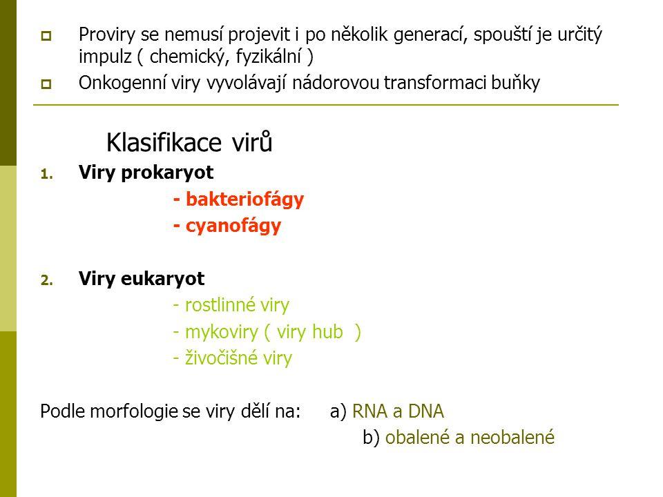 Bakteriální viry  Bakteriofág: - T4: skládá se z hlavičky, bičíku a bičíkových vláken - Hlavička se skládá z nukleové kyseliny a kapsidu - Vnější vlákna bičíku jsou stažitelná, vnitřní jsou ve formě trubičky (nekontraktilní) - Provedení bakteriofága je různé – bez bičíku, bez hlavičky a bičíku (vláknité)