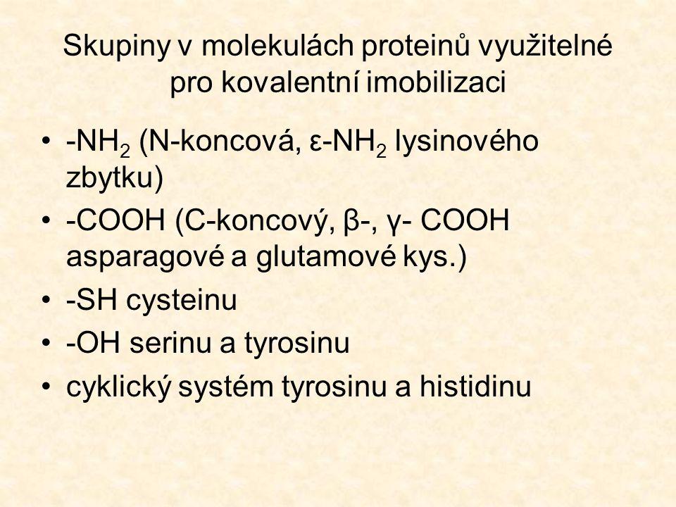 Skupiny v molekulách proteinů využitelné pro kovalentní imobilizaci •-NH 2 (N-koncová, ε-NH 2 lysinového zbytku) •-COOH (C-koncový, β-, γ- COOH asparagové a glutamové kys.) •-SH cysteinu •-OH serinu a tyrosinu •cyklický systém tyrosinu a histidinu