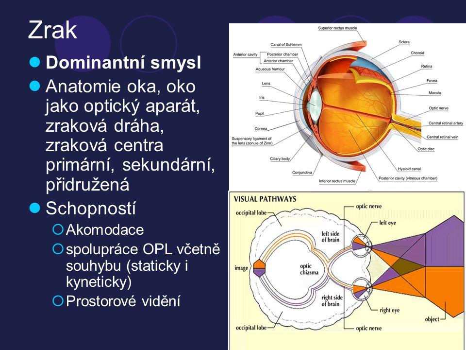 Zraková percepce  Schopnost mozku rozumět a interpretovat co oči vidí  Identifikace (rozpoznání)  Diskriminace (roztřídění)  Pochopení (vztahy mezi objekty)  Interpretace  Vyšší funkce  Paměť = schopnost vzdělávání  Aktivity každodenního života  Děje  vizuální podněty  vícečetné podněty  dynamické podněty