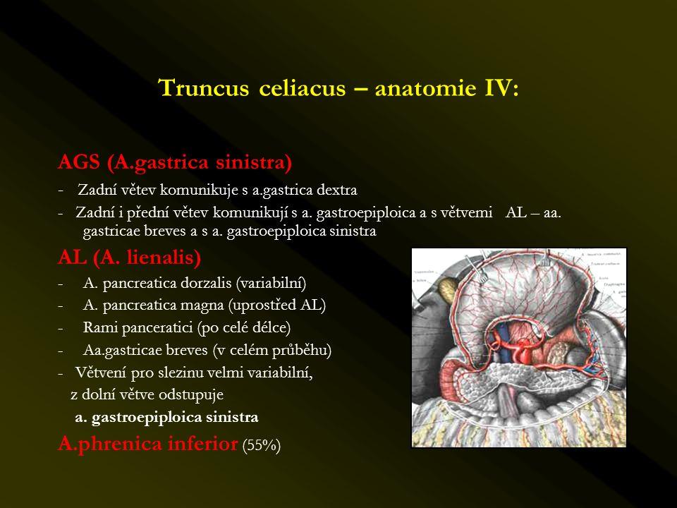 Truncus celiacus – anatomie IV: AGS (A.gastrica sinistra) - Zadní větev komunikuje s a.gastrica dextra - Zadní i přední větev komunikují s a. gastroep