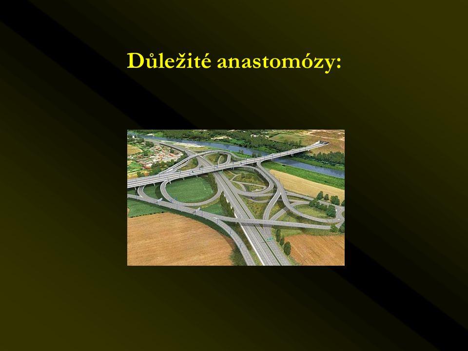 Důležité anastomózy: