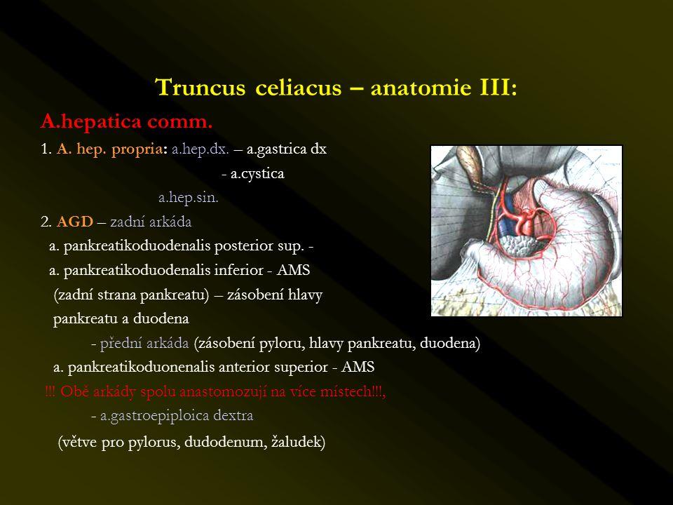 Truncus celiacus – anatomie III: A.hepatica comm. 1. A. hep. propria: a.hep.dx. – a.gastrica dx - a.cystica a.hep.sin. 2. AGD – zadní arkáda a. pankre