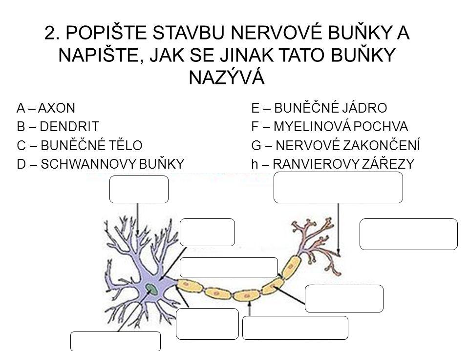 """7.cnS JE TVOŘENA HMOTOU, JEJÍŽ BARVA ZAVISÍ NA """"STAVBĚ ."""