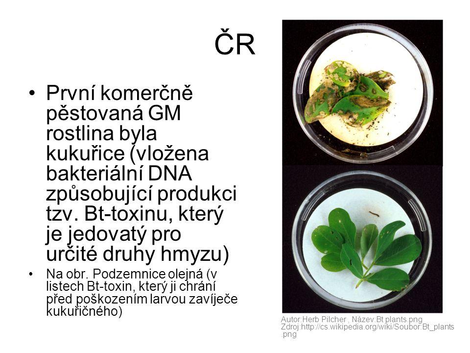 ČR •První komerčně pěstovaná GM rostlina byla kukuřice (vložena bakteriální DNA způsobující produkci tzv. Bt-toxinu, který je jedovatý pro určité druh